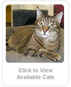 Click here to see adoptable cats