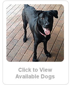 Click here to see available dogs