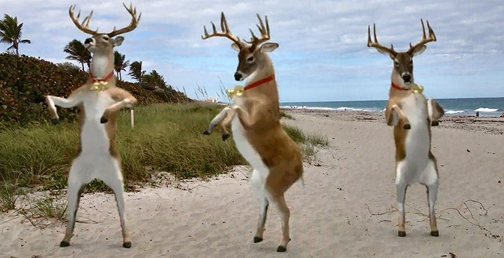 Reindeer on Jupiter Beach